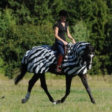 Bucas Buzz Off Zebra Riding Fly Sheet