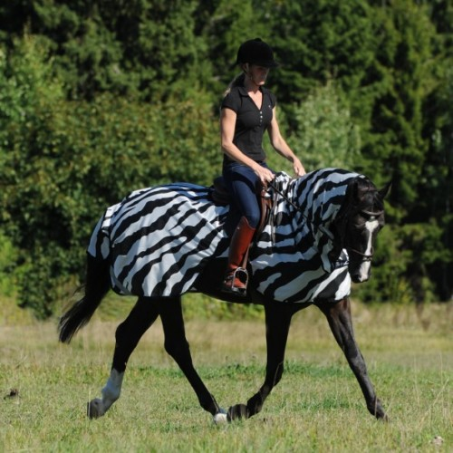 Zebra Fly Rug Uk: Bucas Buzz Off Zebra Riding Fly Sheet